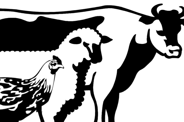 Livestock-and-poultry-insurance